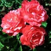 Roses 9 Art Print