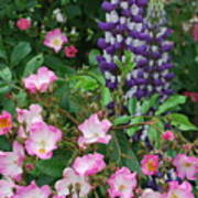 Roses And Lupines Art Print