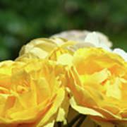 Roses Art Prints Canvas Sunlit Yellow Rose Flowers Baslee Troutman Art Print