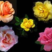 Roses Beautiful Art Print