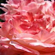 Roses Cinnamon Pink Rose Flowers 3 Rose Garden Art Baslee Troutman Art Print