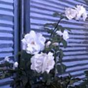 Roses De Lignes Bleues Art Print