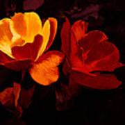 Roses In Molten Gold Art Art Print