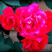Roses On Stucco Art Print