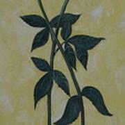 Long Stem Roses Art Print