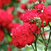 Roses Spring Scene Art Print