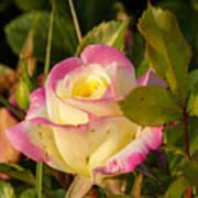 Roses Warm Hearts Art Print