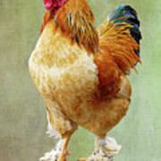 Otis T Rooster Art Print