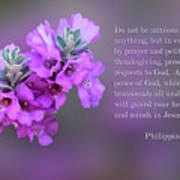 Rosy Lavender Sage Blossoms Phil.4 V 6-7 Art Print