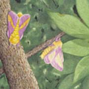 Rosy Maple Moth Gathering Art Print