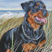 Rottweiler Beach Art Print