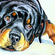 Rottweiler Print by Lyn Cook