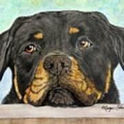 Rottweiler's Sweet Face 2 Art Print by Megan Cohen