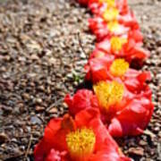 Row Of Flowers Art Print