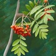 Rowan Tree Art Print