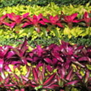 Rows Of Bromeliads Art Print