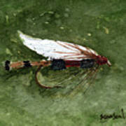 Royal Coachman Wet Fly Art Print