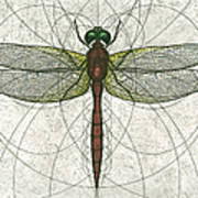 Ruby Meadowhawk Dragonfly Print by Charles Harden
