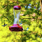 Ruby-throated Hummingbird 3 Art Print