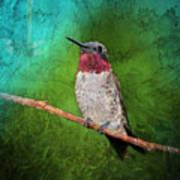 Ruby Throated Hummingbird Art Print
