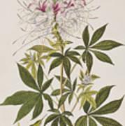 Ruff-necked Hummingbird Art Print