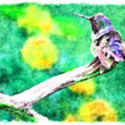 Ruffled Hummingbird - Digital Paint 5 Art Print