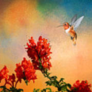 Rufous Dream Art Print