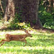 Run Bambi Run Art Print