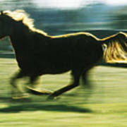 Running Horse Backlit Art Print
