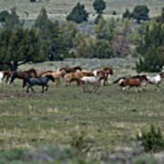 Running Wild Horses  Art Print