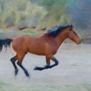 Running Wild Stallion Art Print