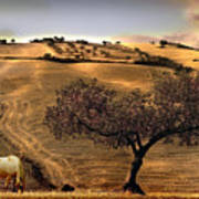 Rural Spain View Art Print
