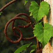 Rust Vine Art Print