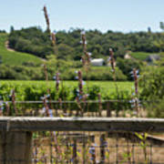 Rustic Fence In Wine Country Art Print