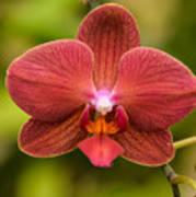 Rusty Orchid Art Print