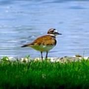 Sad Bird Near Pond Art Print