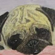 Snugly  Pug Art Print