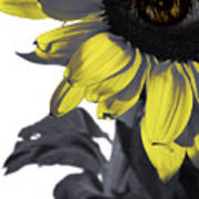 Sad Sunflower Art Print