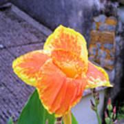 Saging Saging Tropical Flower Philippines Art Print