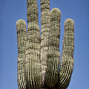 Saguaro 2 Art Print