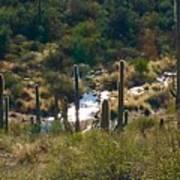Saguaro Creek Art Print