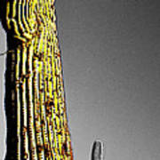 Saguaro Gestures Art Print