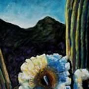 Saguaro In Bloom Art Print