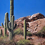 Saguaro National Monument Art Print
