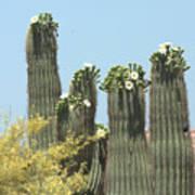 Saguaro Sisters Art Print