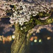 Sakura At Night Art Print