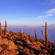 Salar De Uyuni And Cacti At Sunrise Art Print