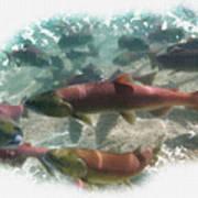 Salmon Migration Art Print