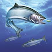 Salmon Painting Art Print