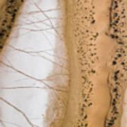 Salt Pans Deep In The Kalahari With 4x4 Art Print